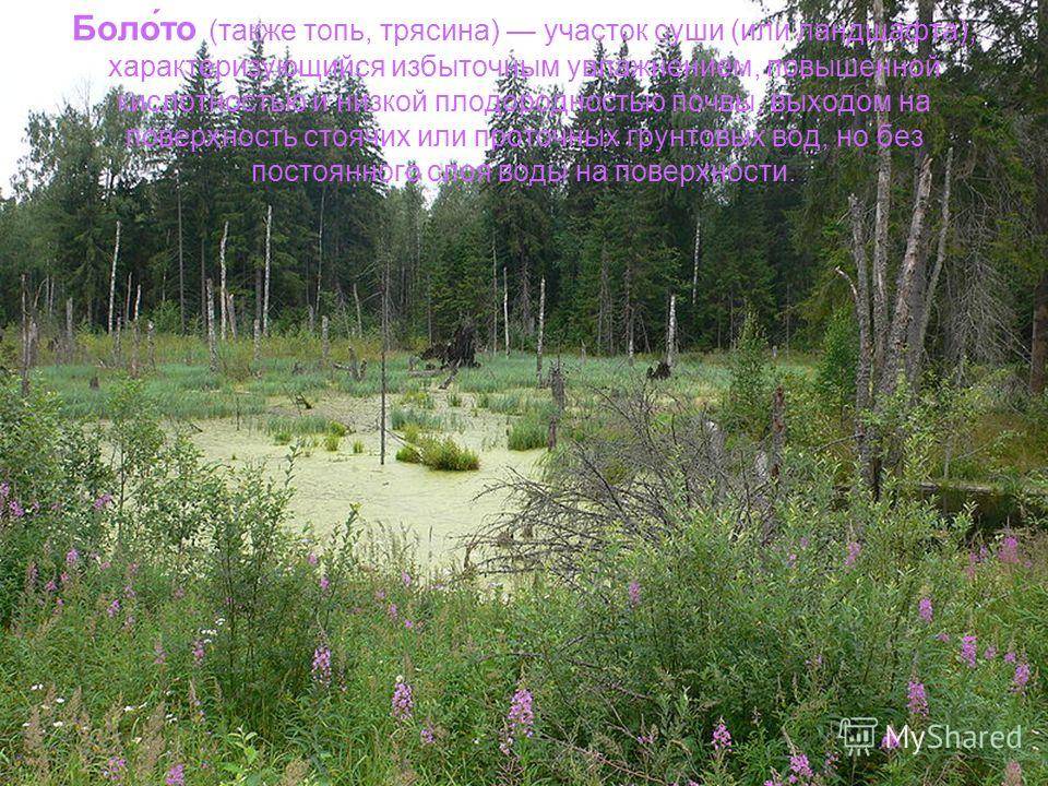 Боло́то (также топь, трясина) участок суши (или ландшафта), характеризующийся избыточным увлажнением, повышенной кислотностью и низкой плодородностью почвы, выходом на поверхность стоячих или проточных грунтовых вод, но без постоянного слоя воды на п