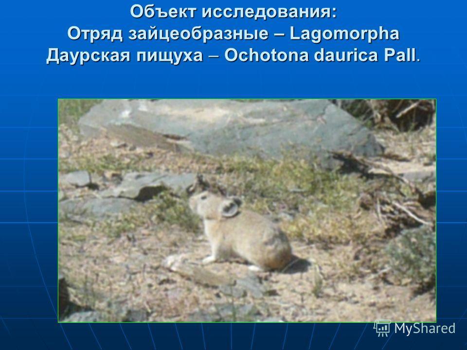 Объект исследования: Отряд зайцеобразные – Lagomorpha Даурская пищуха – Ochotona daurica Pall.