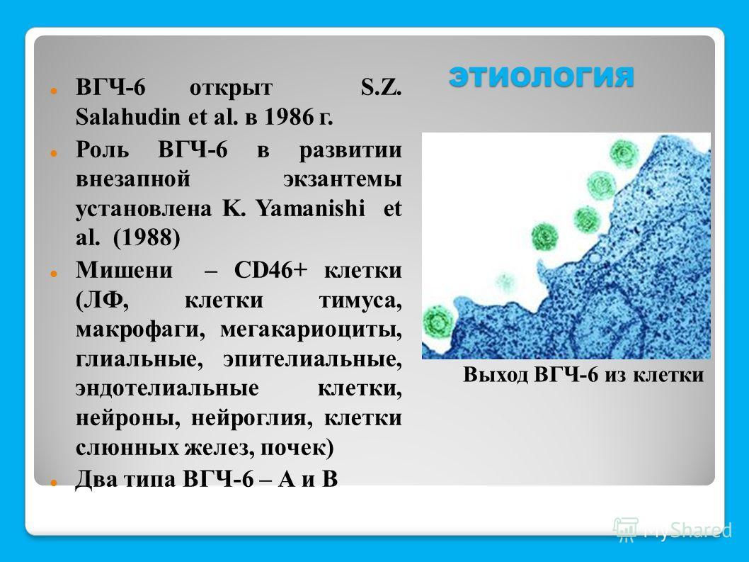 ЭТИОЛОГИЯ ВГЧ-6 открыт S.Z. Salahudin et al. в 1986 г. Роль ВГЧ-6 в развитии внезапной экзантемы установлена K. Yamanishi et al. (1988) Мишени – CD46+ клетки (ЛФ, клетки тимуса, макрофаги, мегакариоциты, глиальные, эпителиальные, эндотелиальные клетк