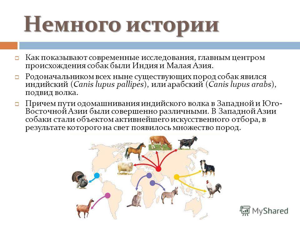 Немного истории Как показывают современные исследования, главным центром происхождения собак были Индия и Малая Азия. Родоначальником всех ныне существующих пород собак явился индийский (Canis lupus pallipes), или арабский (Canis lupus arabs), подвид