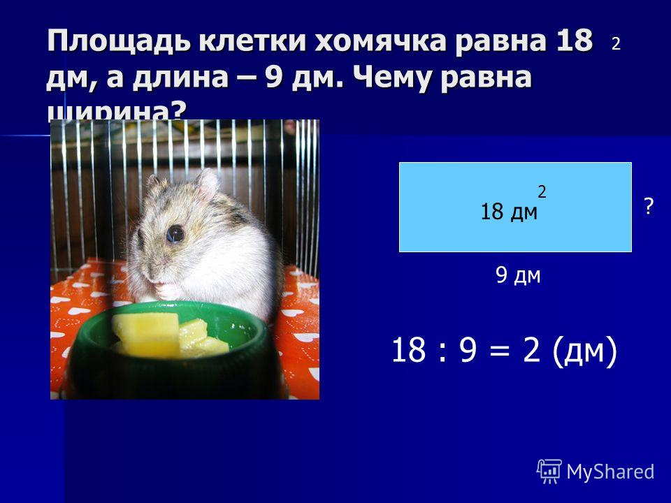 Площадь клетки хомячка равна 18 дм, а длина – 9 дм. Чему равна ширина? 2 9 дм 18 дм 2 ? 18 : 9 = 2 (дм)