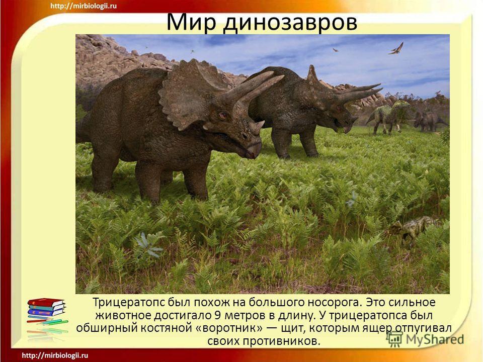 Мир динозавров Трицератопс был похож на большого носорога. Это сильное животное достигало 9 метров в длину. У трицератопса был обширный костяной «воротник» щит, которым ящер отпугивал своих противников.