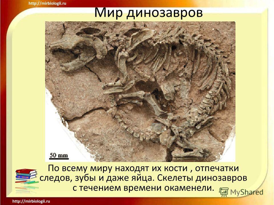 Мир динозавров По всему миру находят их кости, отпечатки следов, зубы и даже яйца. Скелеты динозавров с течением времени окаменели.