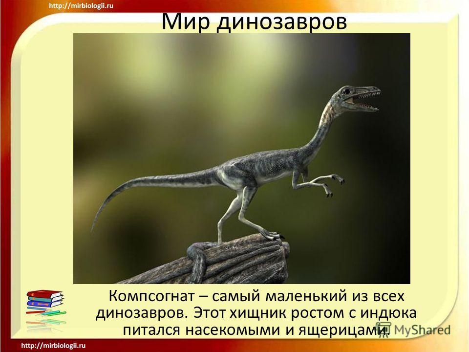 Мир динозавров Компсогнат – самый маленький из всех динозавров. Этот хищник ростом с индюка питался насекомыми и ящерицами.