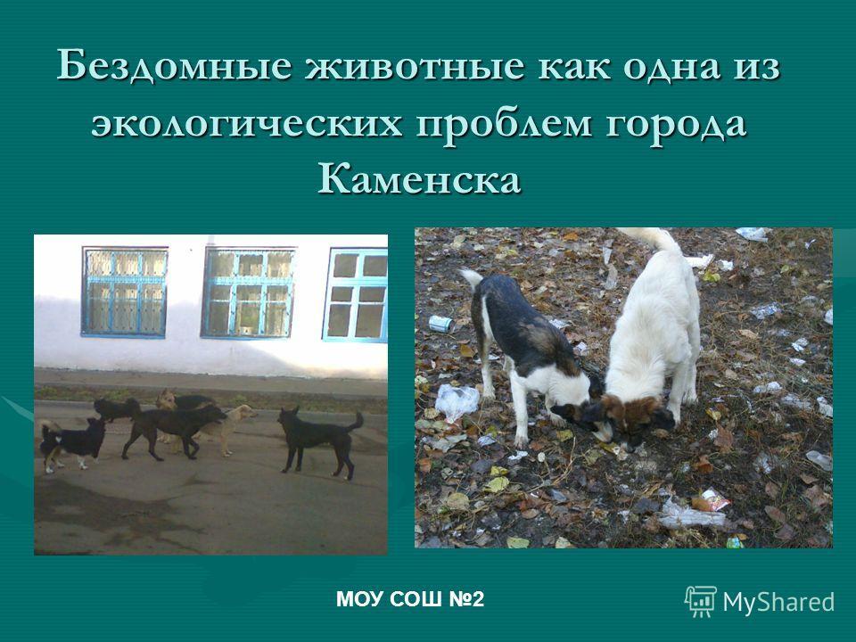 Бездомные животные как одна из экологических проблем города Каменска МОУ СОШ 2