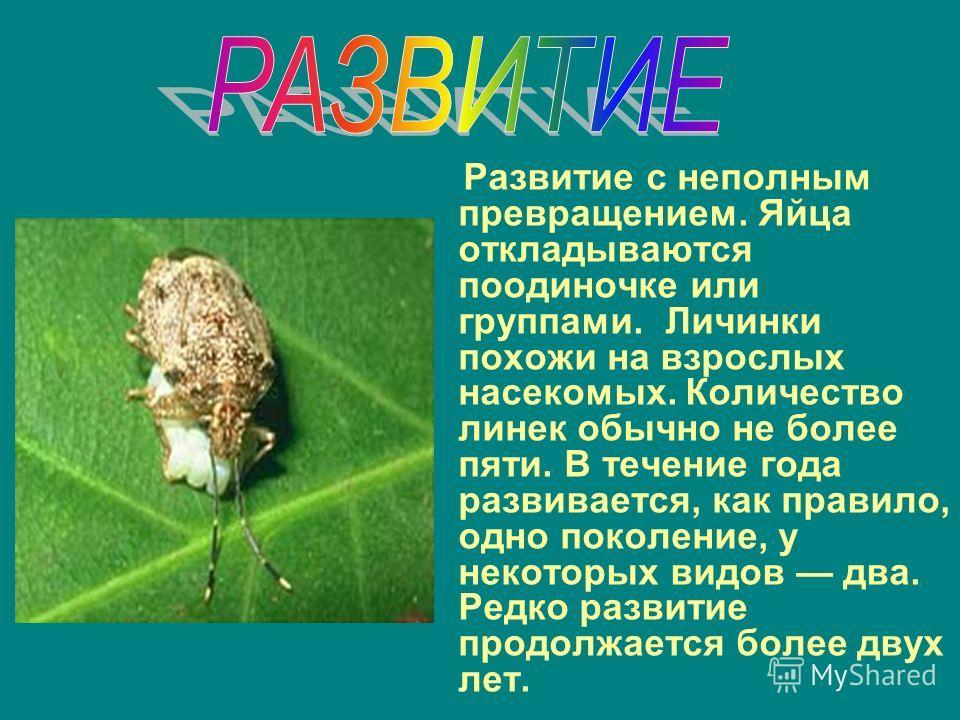 Развитие с неполным превращением. Яйца откладываются поодиночке или группами. Личинки похожи на взрослых насекомых. Количество линек обычно не более пяти. В течение года развивается, как правило, одно поколение, у некоторых видов два. Редко развитие