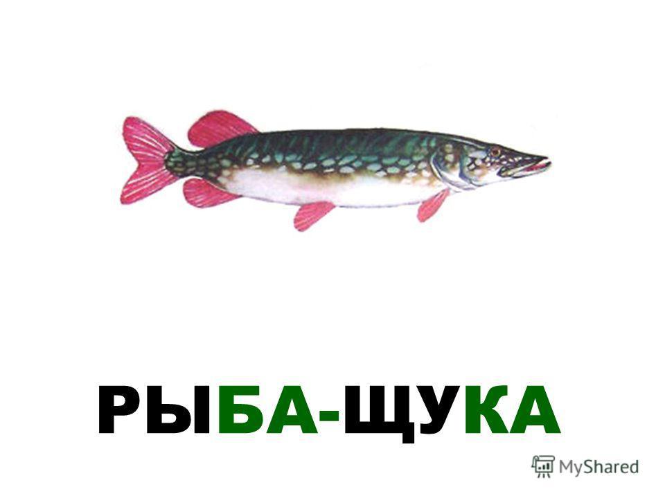 РЫБА-ЩУКА