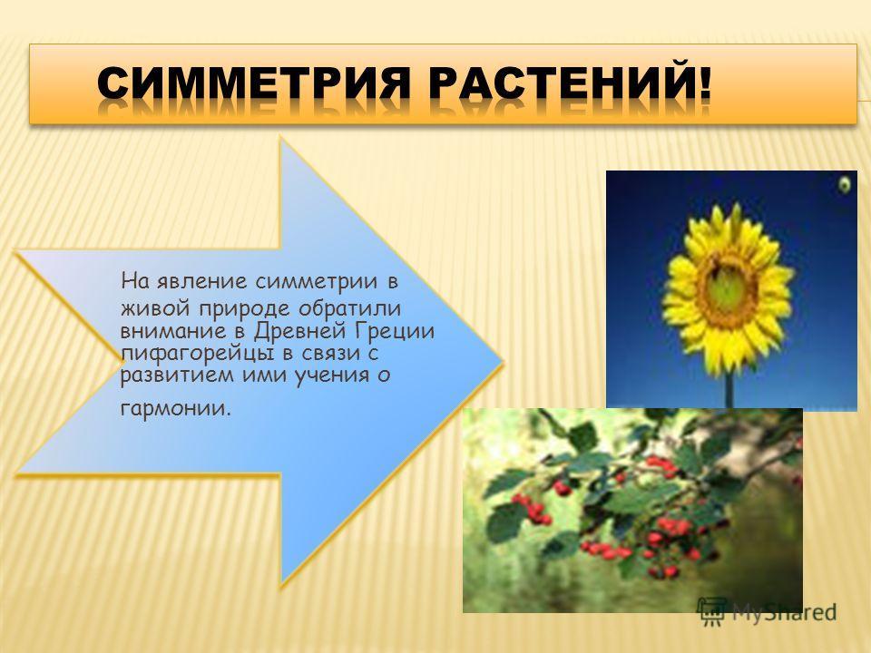 На явление симметрии в живой природе обратили внимание в Древней Греции пифагорейцы в связи с развитием ими учения о гармонии.