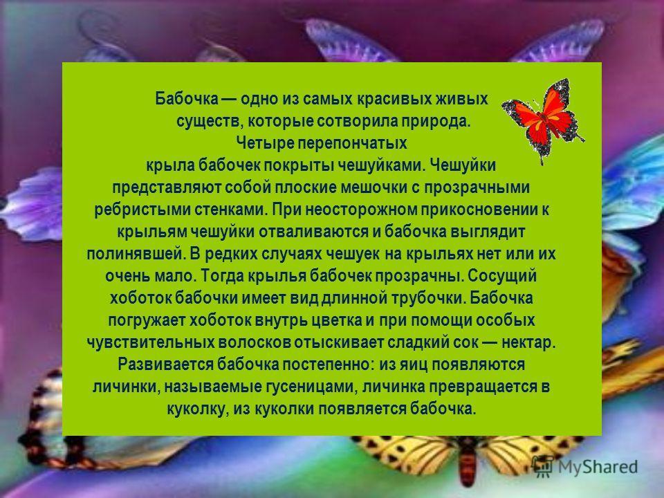 Бабочка одно из самых красивых живых существ, которые сотворила природа. Четыре перепончатых крыла бабочек покрыты чешуйками. Чешуйки представляют собой плоские мешочки с прозрачными ребристыми стенками. При неосторожном прикосновении к крыльям чешуй