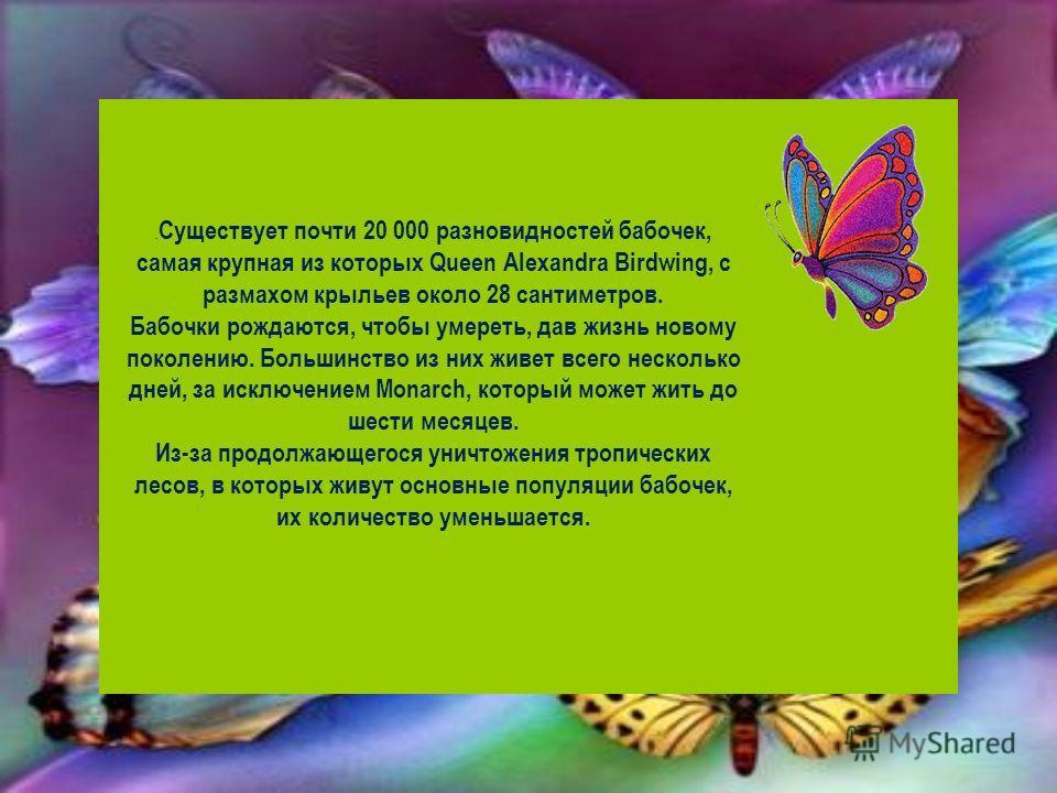 . Существует почти 20 000 разновидностей бабочек, самая крупная из которых Queen Alexandra Birdwing, с размахом крыльев около 28 сантиметров. Бабочки рождаются, чтобы умереть, дав жизнь новому поколению. Большинство из них живет всего несколько дней,