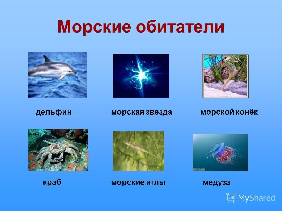 Морские обитатели дельфин крабморские иглымедуза морская звездаморской конёк