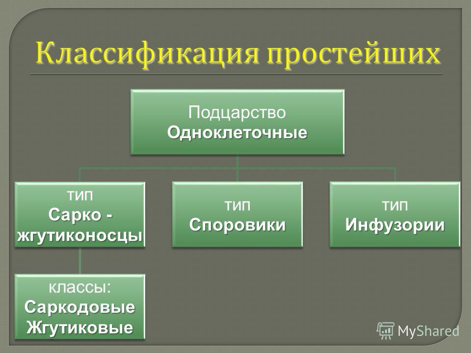 ПодцарствоОдноклеточные тип Сарко - жгутиконосцы классы:СаркодовыеЖгутиковые типСпоровики Инфузории