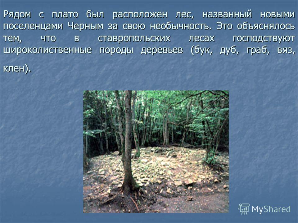 Рядом с плато был расположен лес, названный новыми поселенцами Черным за свою необычность. Это объяснялось тем, что в ставропольских лесах господствуют широколиственные породы деревьев (бук, дуб, граб, вяз, клен).