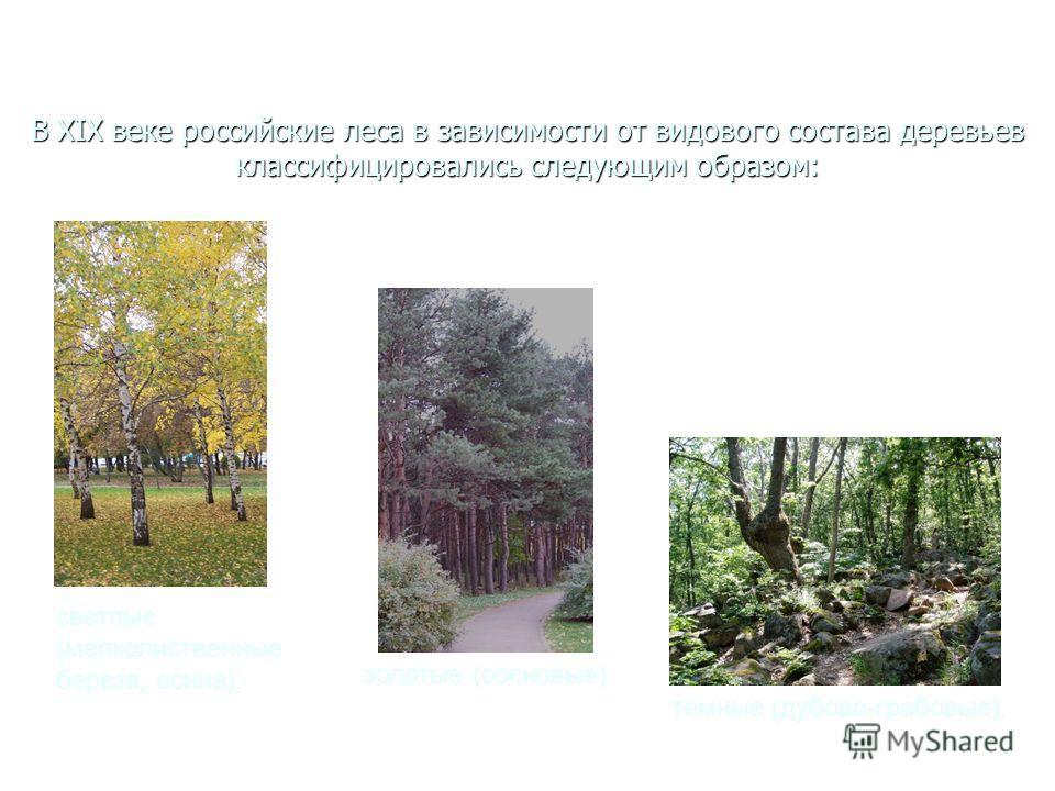 В XIX веке российские леса в зависимости от видового состава деревьев классифицировались следующим образом: светлые (мелколиственные береза, осина), золотые (сосновые) темные (дубово-грабовые).