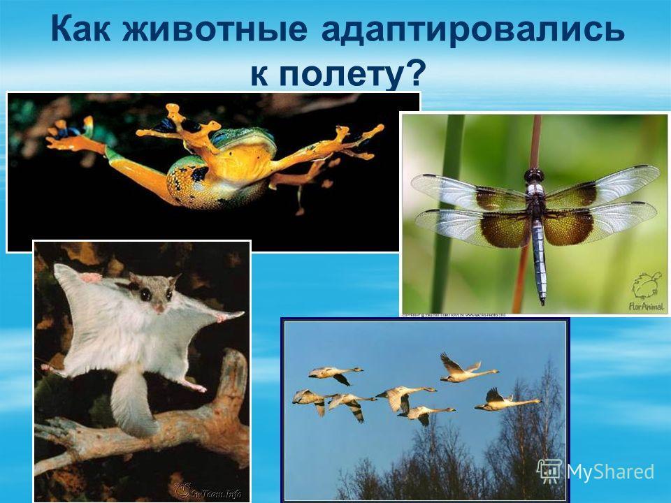 Как животные адаптировались к полету?