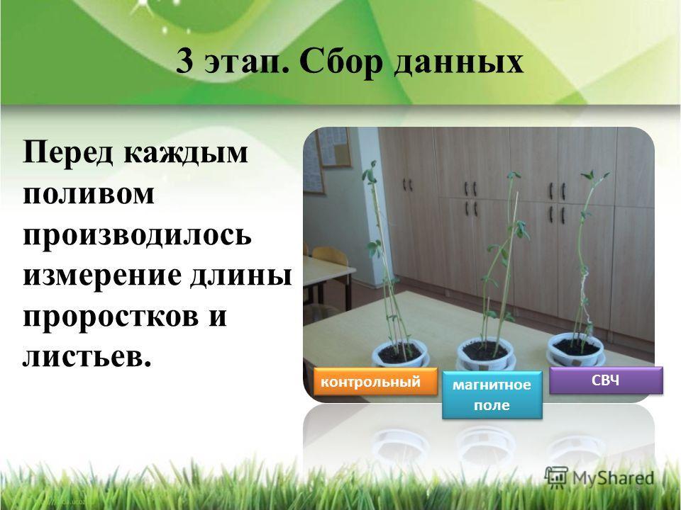 3 этап. Сбор данных Перед каждым поливом производилось измерение длины проростков и листьев. 8 контрольный магнитное поле СВЧ