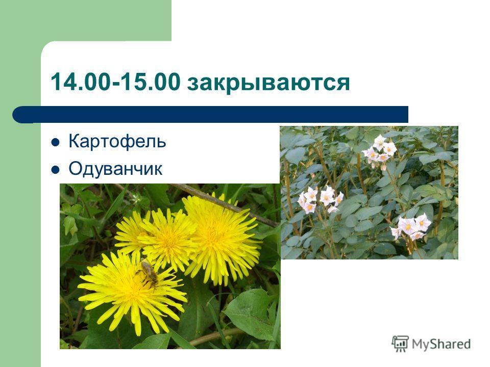 14.00-15.00 закрываются Картофель Одуванчик