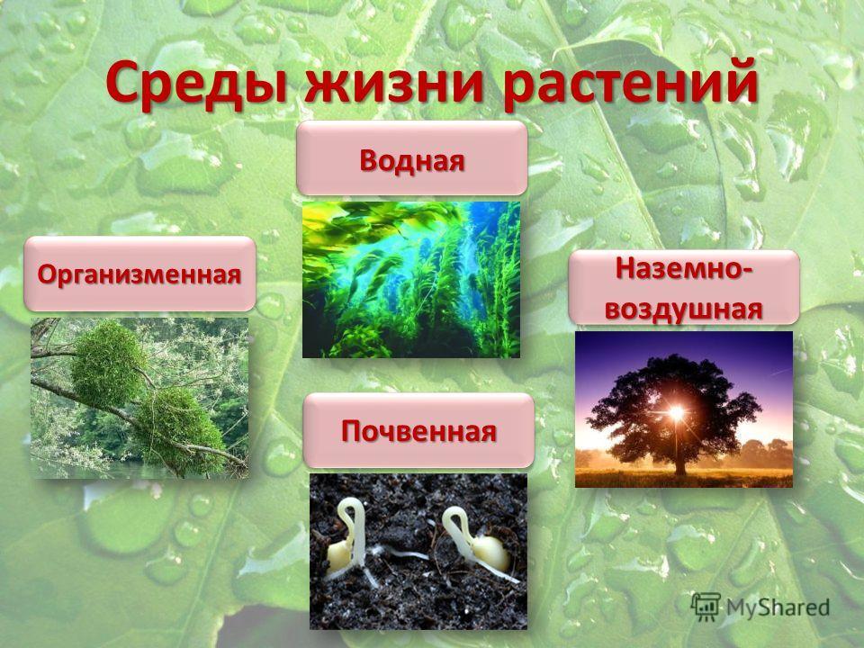 Среды жизни растений Наземно- воздушная ПочвеннаяПочвенная ОрганизменнаяОрганизменная ВоднаяВодная