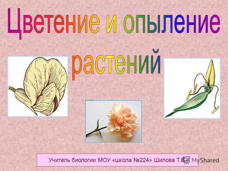 Учитель биологии МОУ «школа 224» Шилова Т.В.
