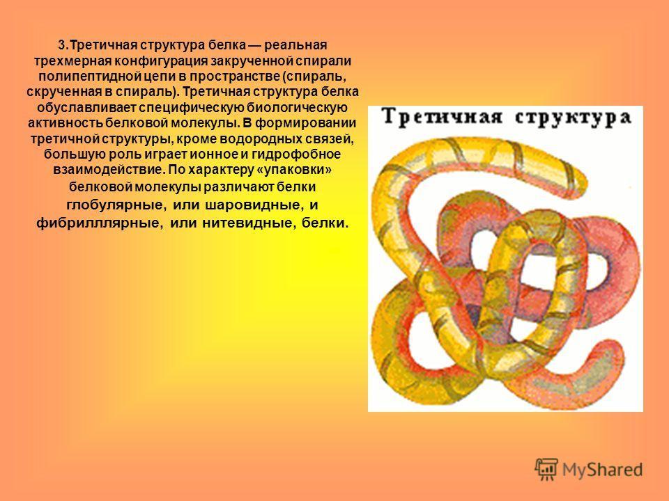 3.Третичная структура белка реальная трехмерная конфигурация закрученной спирали полипептидной цепи в пространстве (спираль, скрученная в спираль). Третичная структура белка обуславливает специфическую биологическую активность белковой молекулы. В фо
