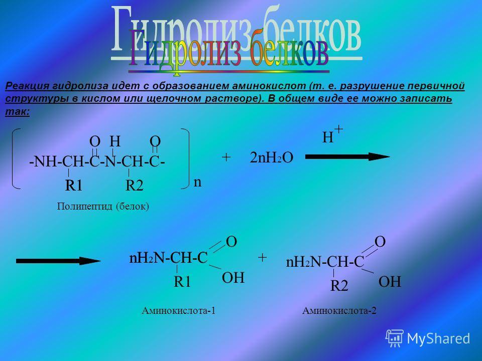-NH-CH-C-N-CH-C- R1 O H R2 O n +2nH 2 O H + nH 2 N-CH-C R1 OH R1 + nH 2 N-CH-C O O OH R2 nH 2 N-CH-C Полипептид (белок) Аминокислота-1Аминокислота-2 Реакция гидролиза идет с образованием аминокислот (т. е. разрушение первичной структуры в кислом или