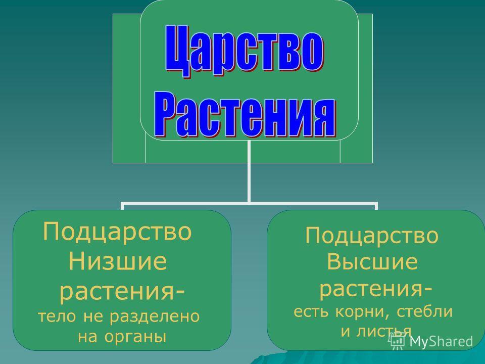 Подцарство Низшие растения- тело не разделено на органы Подцарство Высшие растения- есть корни, стебли и листья