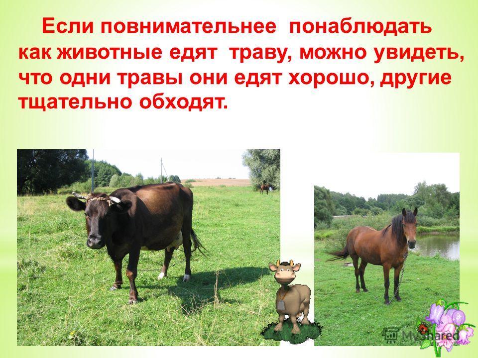 Если повнимательнее понаблюдать как животные едят траву, можно увидеть, что одни травы они едят хорошо, другие тщательно обходят.