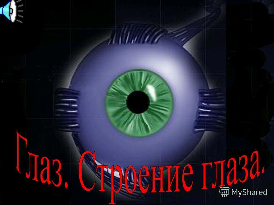 Глаз – это орган зрения