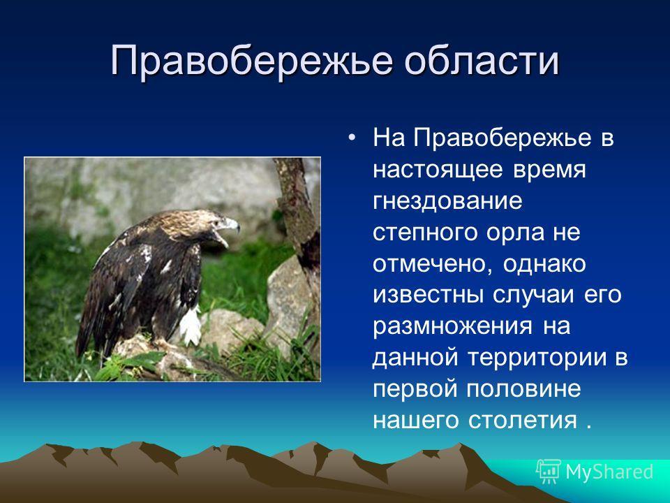 Правобережье области На Правобережье в настоящее время гнездование степного орла не отмечено, однако известны случаи его размножения на данной территории в первой половине нашего столетия.