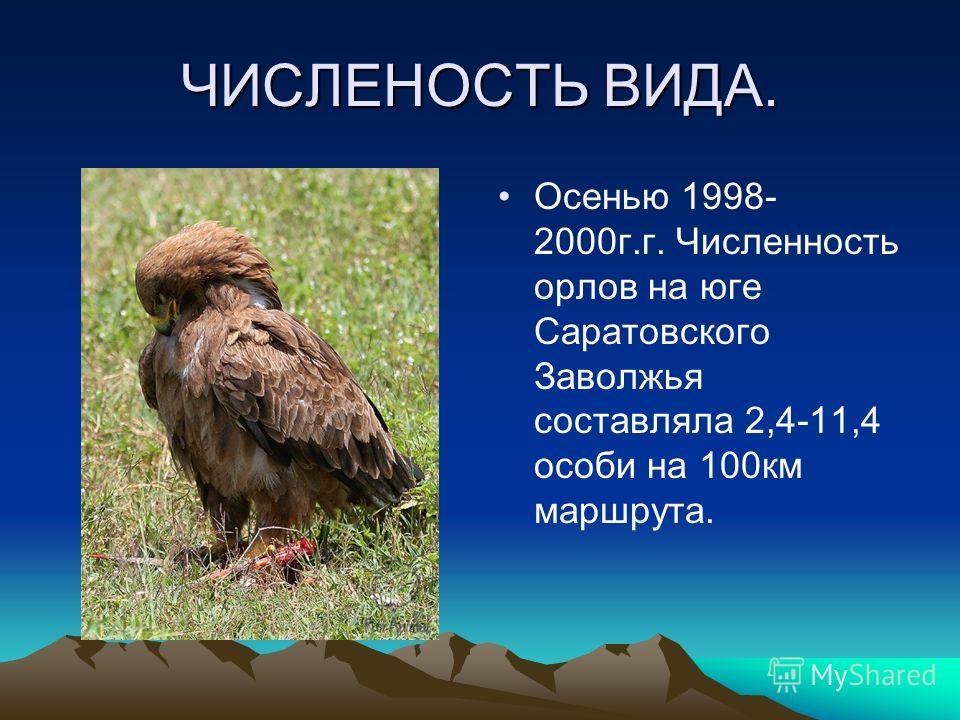 ЧИСЛЕНОСТЬ ВИДА. Осенью 1998- 2000г.г. Численность орлов на юге Саратовского Заволжья составляла 2,4-11,4 особи на 100км маршрута.
