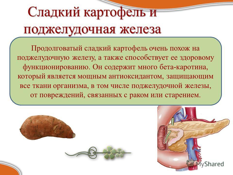 Сладкий картофель и поджелудочная железа Продолговатый сладкий картофель очень похож на поджелудочную железу, а также способствует ее здоровому функционированию. Он содержит много бета-каротина, который является мощным антиоксидантом, защищающим все