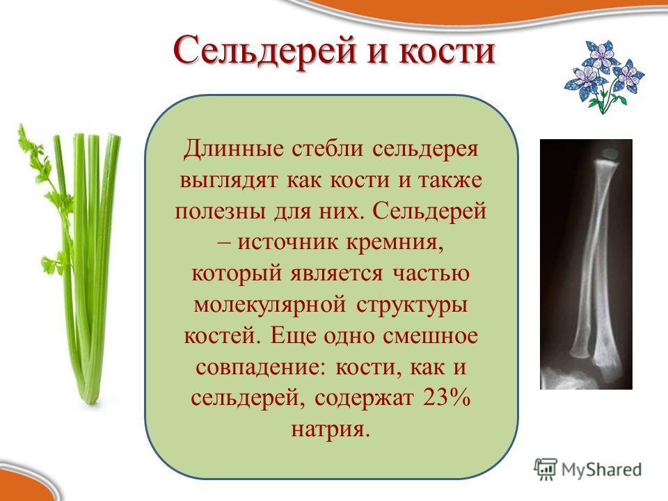 Сельдерей и кости Длинные стебли сельдерея выглядят как кости и также полезны для них. Сельдерей – источник кремния, который является частью молекулярной структуры костей. Еще одно смешное совпадение: кости, как и сельдерей, содержат 23% натрия.
