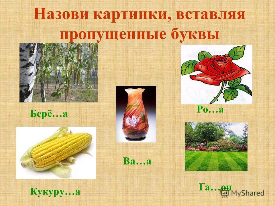 Назови картинки, вставляя пропущенные буквы Кукуру…а Ро…а Га…он Ва…а Берё…а