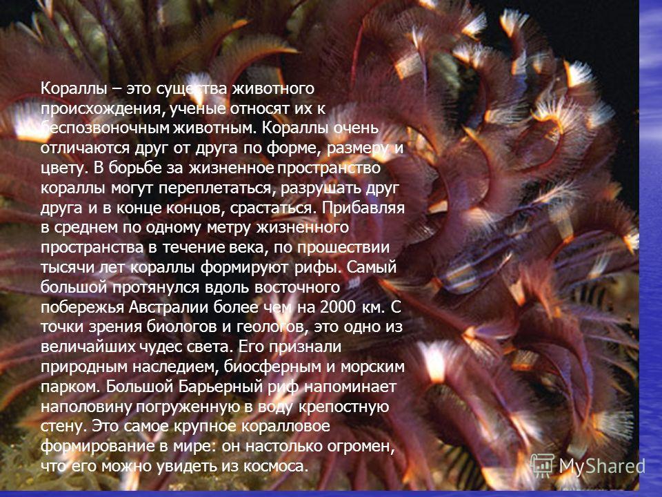 Кораллы – это существа животного происхождения, ученые относят их к беспозвоночным животным. Кораллы очень отличаются друг от друга по форме, размеру и цвету. В борьбе за жизненное пространство кораллы могут переплетаться, разрушать друг друга и в ко