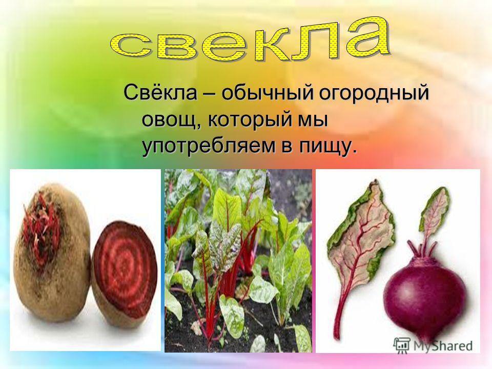 Свёкла – обычный огородный овощ, который мы употребляем в пищу.