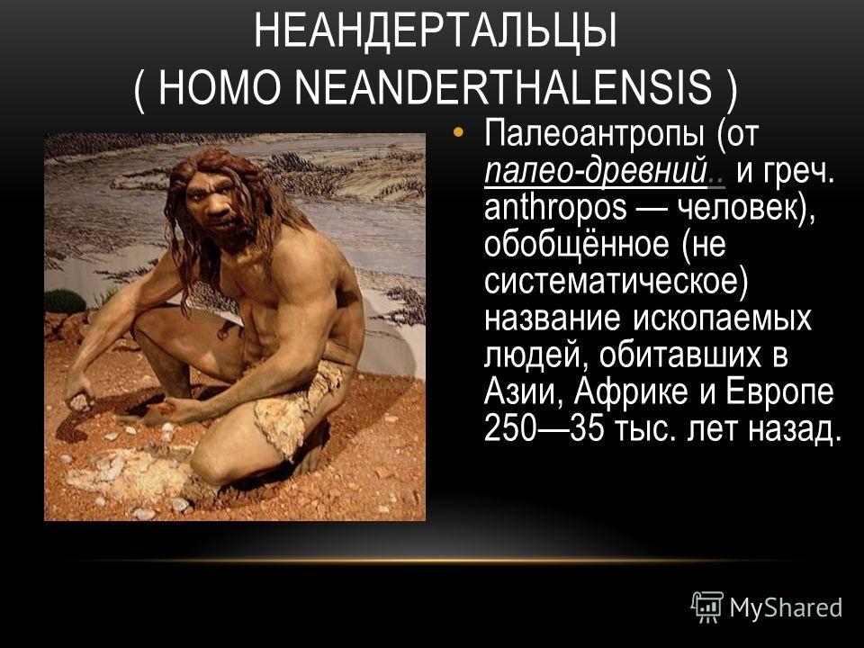 НЕАНДЕРТАЛЬЦЫ ( HOMO NEANDERTHALENSIS ) Палеоантропы (от палео-древний.. и греч. anthropos человек), обобщённое (не систематическое) название ископаемых людей, обитавших в Азии, Африке и Европе 25035 тыс. лет назад...