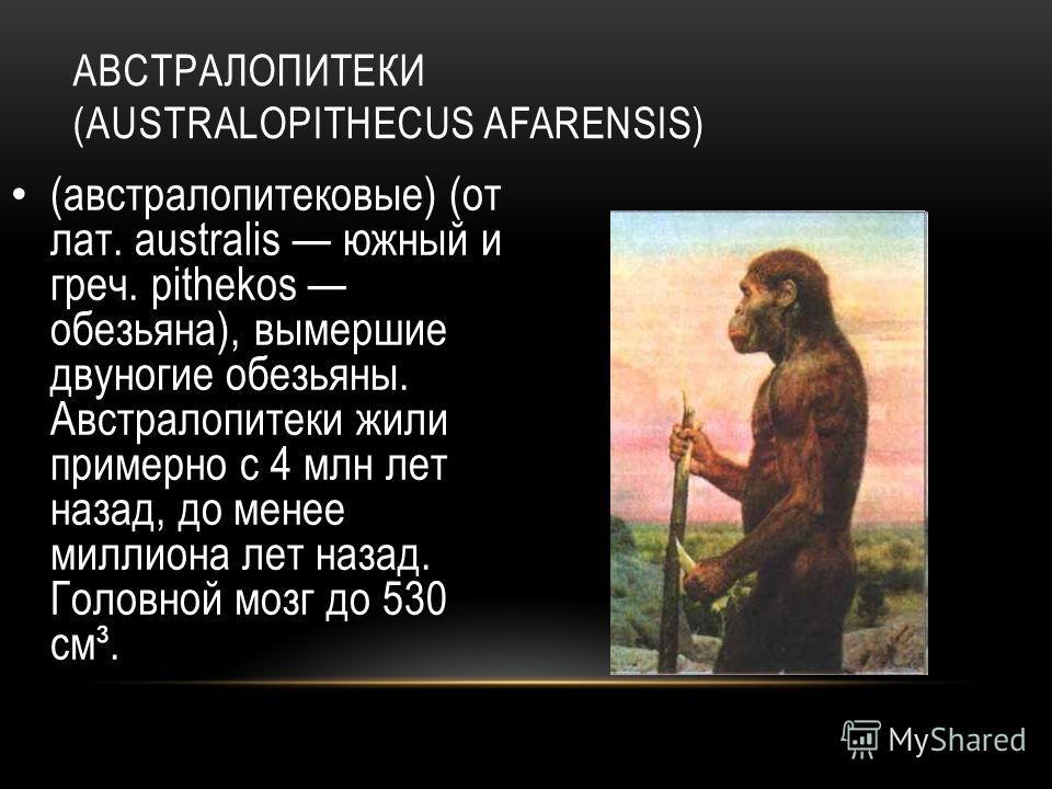 АВСТРАЛОПИТЕКИ (AUSTRALOPITHECUS AFARENSIS) (австралопитековые) (от лат. australis южный и греч. pithekos обезьяна), вымершие двуногие обезьяны. Австралопитеки жили примерно с 4 млн лет назад, до менее миллиона лет назад. Головной мозг до 530 см³.
