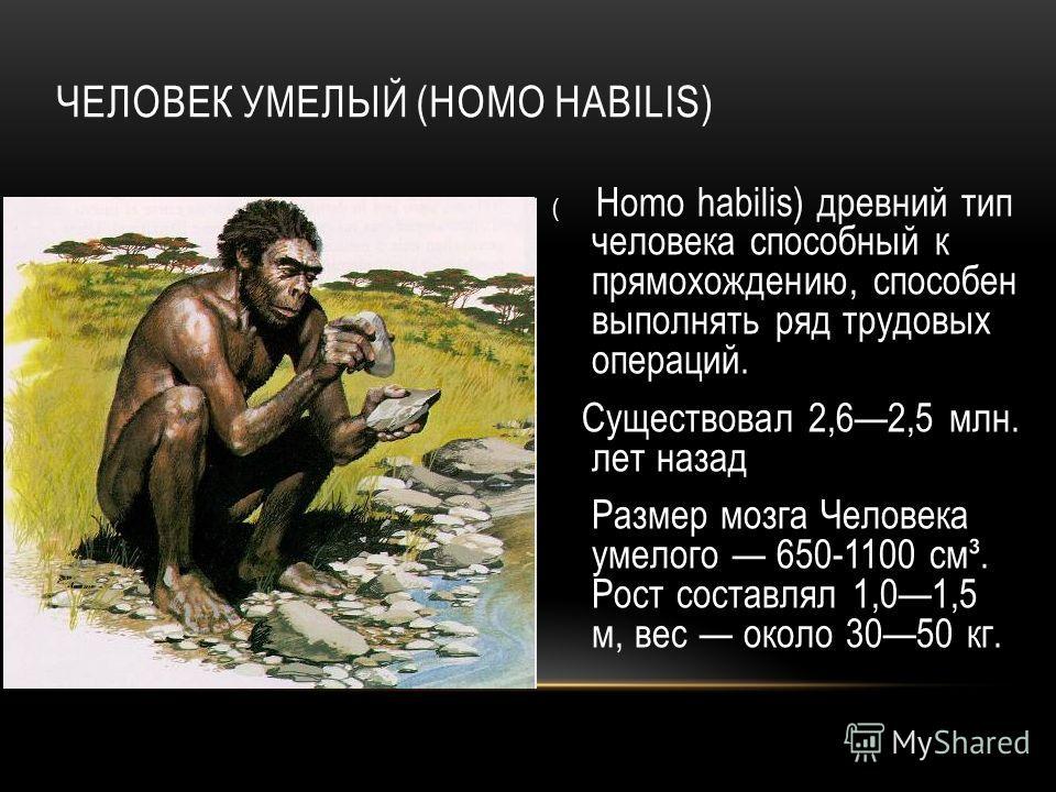 ЧЕЛОВЕК УМЕЛЫЙ (HOMO HABILIS) ( Homo habilis) древний тип человека способный к прямохождению, способен выполнять ряд трудовых операций. Существовал 2,62,5 млн. лет назад Размер мозга Человека умелого 650-1100 см³. Рост составлял 1,01,5 м, вес около 3