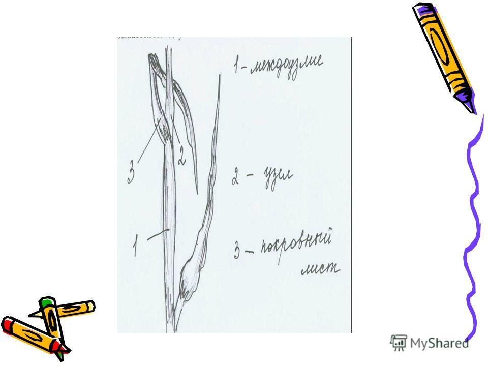Процесс изготовления картины из соломки делится на 2 стадии: подготовка и собственно изготовление. Подготовка включает в себя сбор соломы, её обработка и сортировка. Заготавливать солому можно в течении довольно продолжительного времени, начиная с то