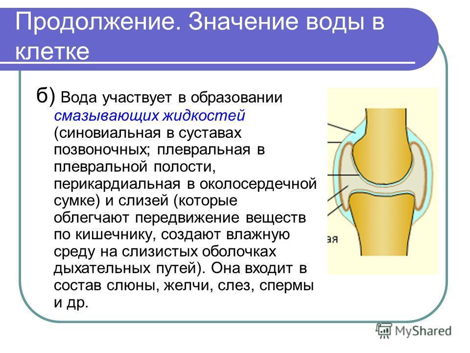 Продолжение. Значение воды в клетке б) Вода участвует в образовании смазывающих жидкостей (синовиальная в суставах позвоночных; плевральная в плевральной полости, перикардиальная в околосердечной сумке) и слизей (которые облегчают передвижение вещест