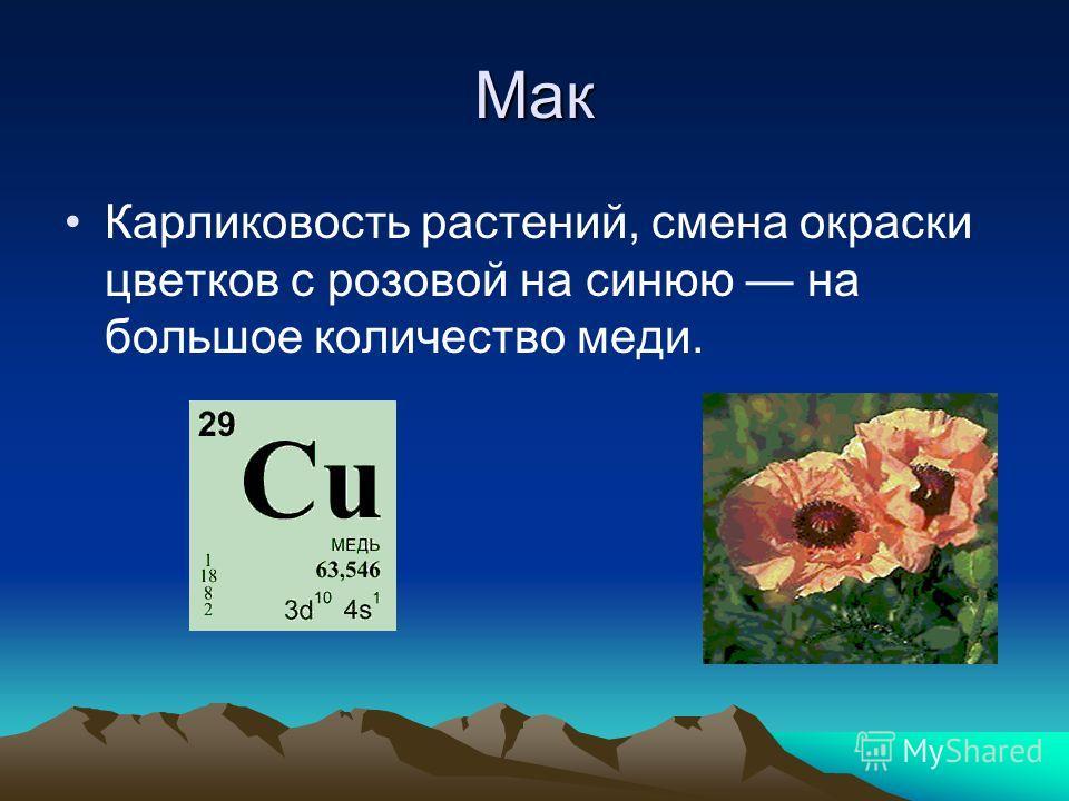 Мак Карликовость растений, смена окраски цветков с розовой на синюю на большое количество меди.