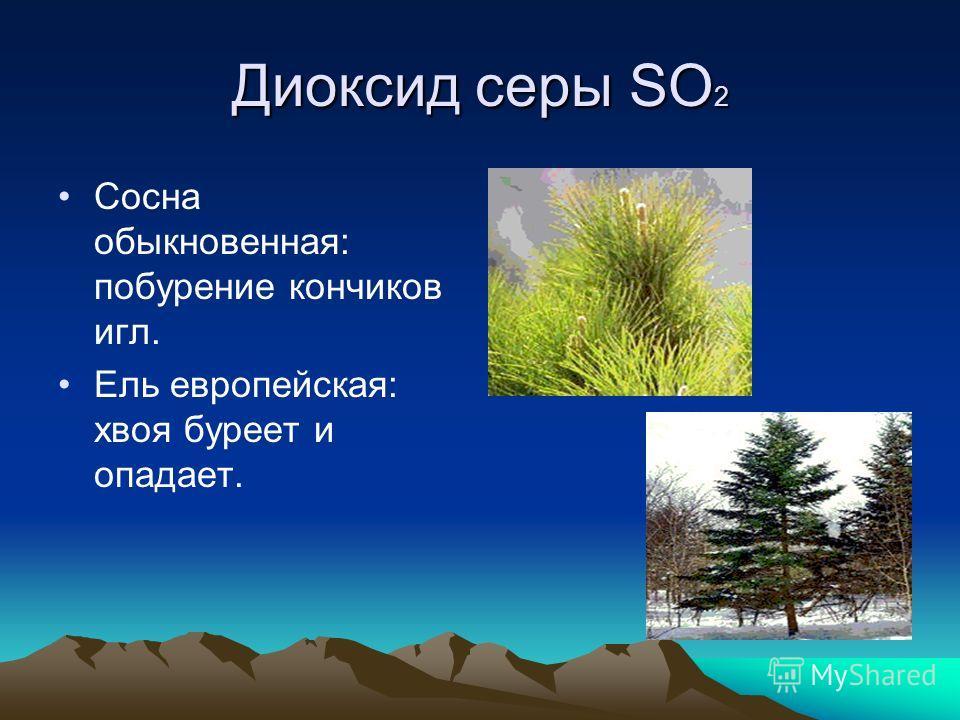 Диоксид серы SO 2 Сосна обыкновенная: побурение кончиков игл. Ель европейская: хвоя буреет и опадает.