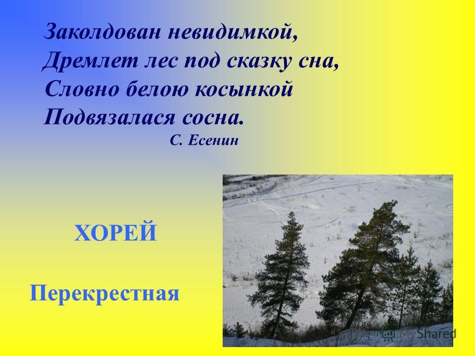 Заколдован невидимкой, Дремлет лес под сказку сна, Словно белою косынкой Подвязалася сосна. С. Есенин ХОРЕЙ Перекрестная