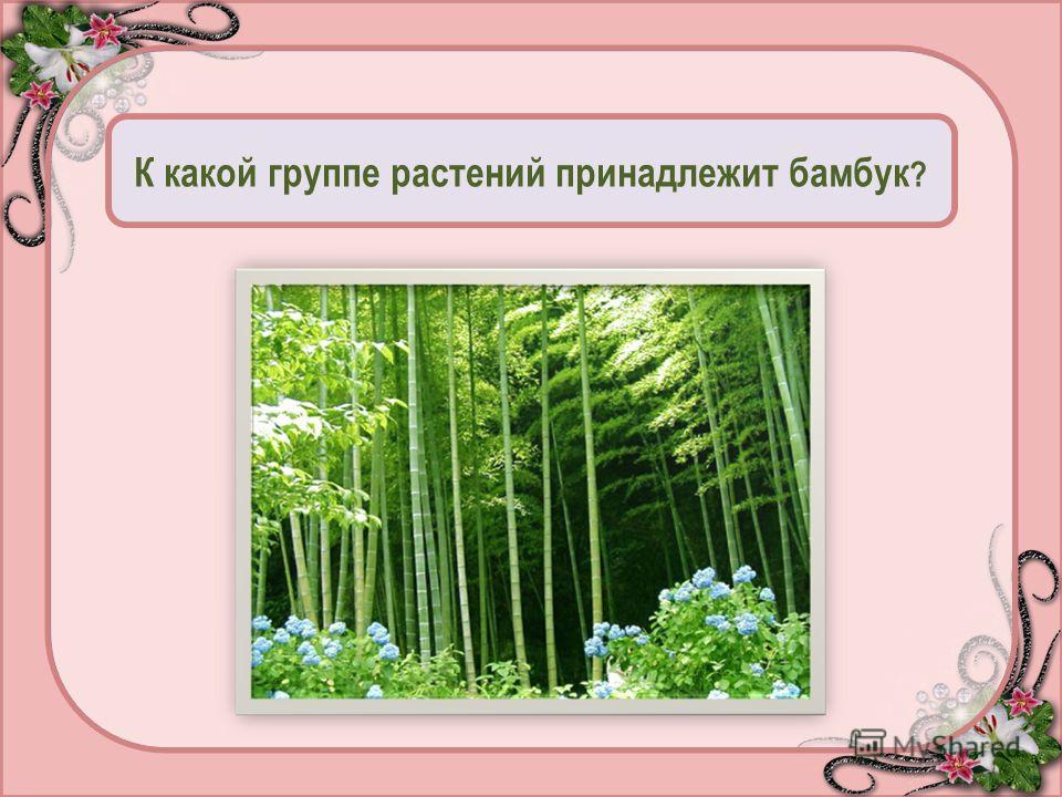 К какой группе растений принадлежит бамбук ? Дерево - 95 Куст - 50 Трава - 0