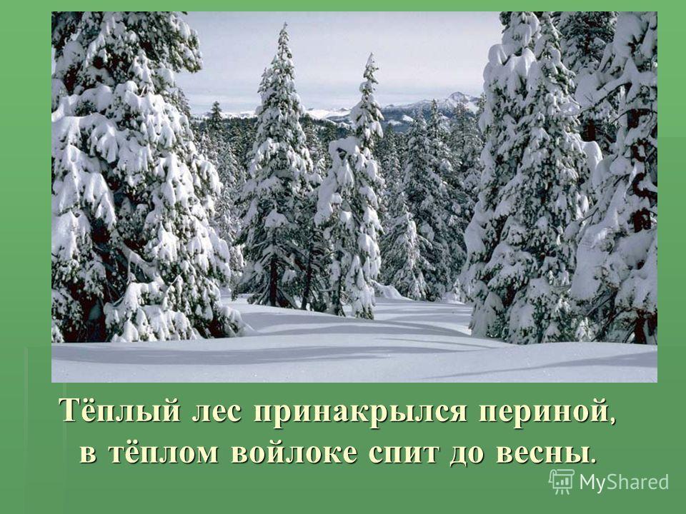 Тёплый лес принакрылся периной, в тёплом войлоке спит до весны.