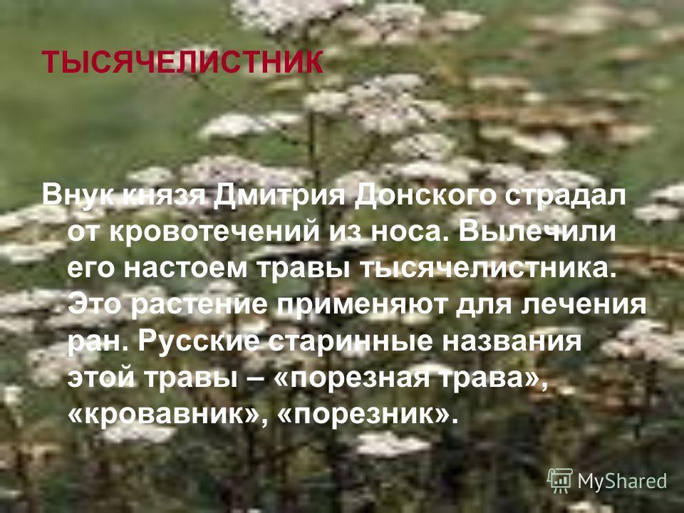 ТЫСЯЧЕЛИСТНИК Внук князя Дмитрия Донского страдал от кровотечений из носа. Вылечили его настоем травы тысячелистника. Это растение применяют для лечения ран. Русские старинные названия этой травы – «порезная трава», «кровавник», «порезник».