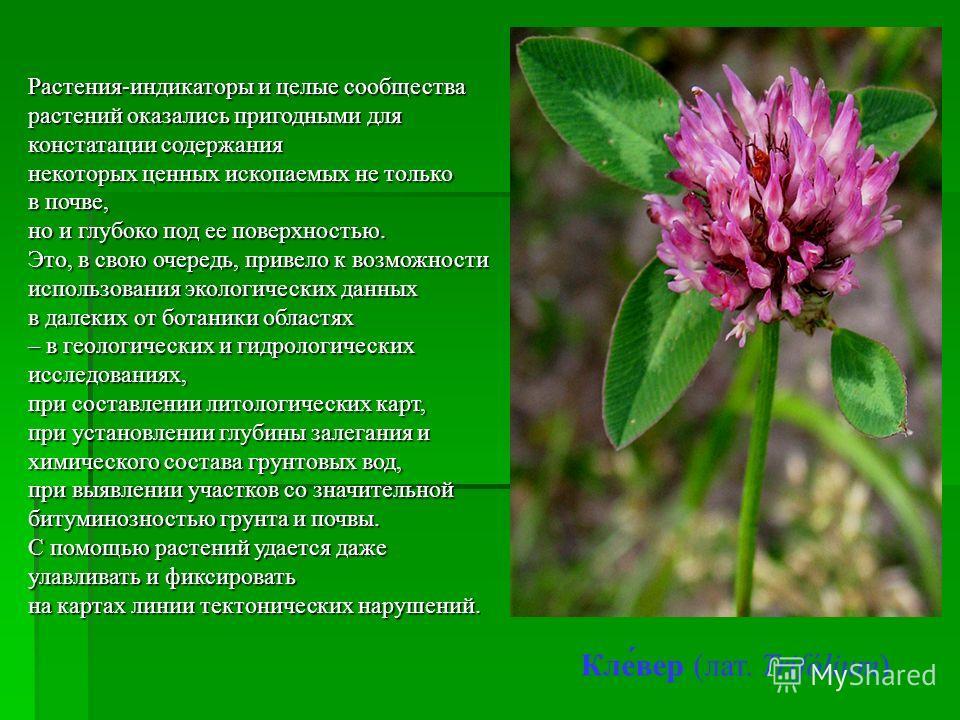 Растения-индикаторы и целые сообщества растений оказались пригодными для констатации содержания некоторых ценных ископаемых не только в почве, но и глубоко под ее поверхностью. Это, в свою очередь, привело к возможности использования экологических да
