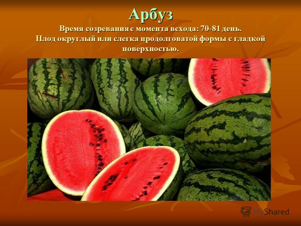 Арбуз Время созревания с момента всхода: 70-81 день. Плод округлый или слегка продолговатой формы с гладкой поверхностью.