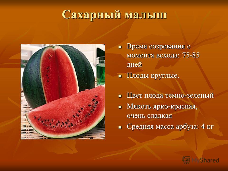 Сахарный малыш Время созревания с момента всхода: 75-85 дней Время созревания с момента всхода: 75-85 дней Плоды круглые. Плоды круглые. Цвет плода темно-зеленый Цвет плода темно-зеленый Мякоть ярко-красная, очень сладкая Мякоть ярко-красная, очень с