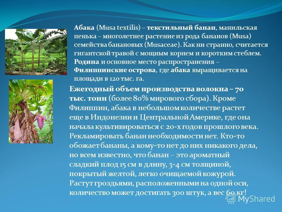 Абака (Musa textilis) – текстильный банан, манильская пенька – многолетнее растение из рода бананов (Musa) семейства банановых (Musaceae). Как ни странно, считается гигантской травой с мощным корнем и коротким стеблем. Родина и основное место распрос